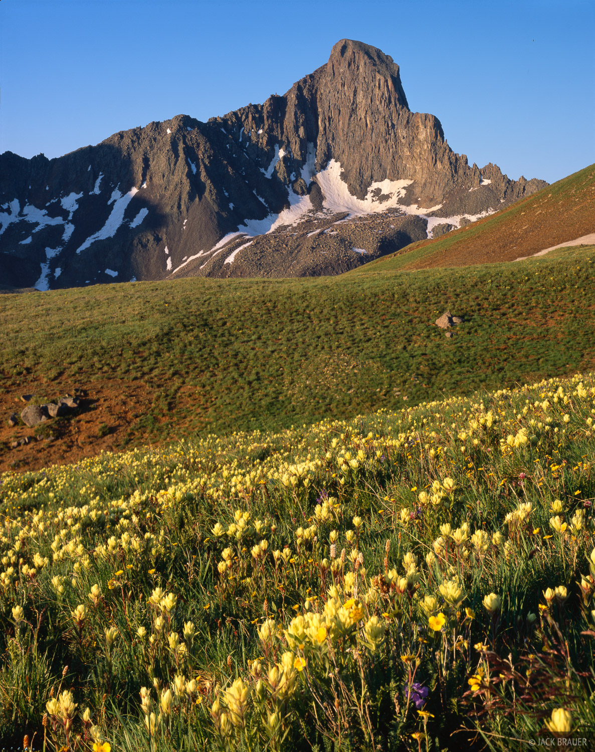 Wetterhorn Peak, wildflowers, Uncompahgre Wilderness, Colorado, photo