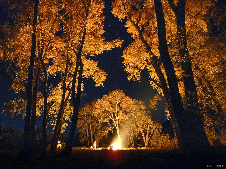 Autumn cottonwoods illuminated by a big bonfire.