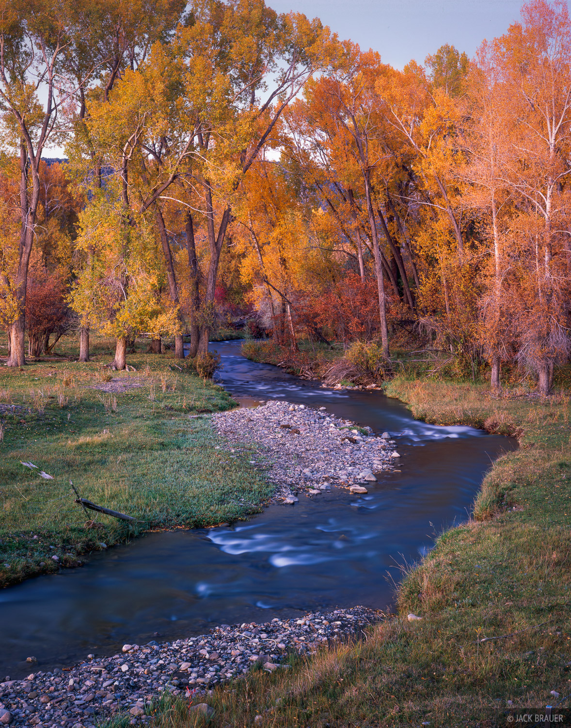 Dallas Creek Autumn, cottonwoods, Colorado, photo