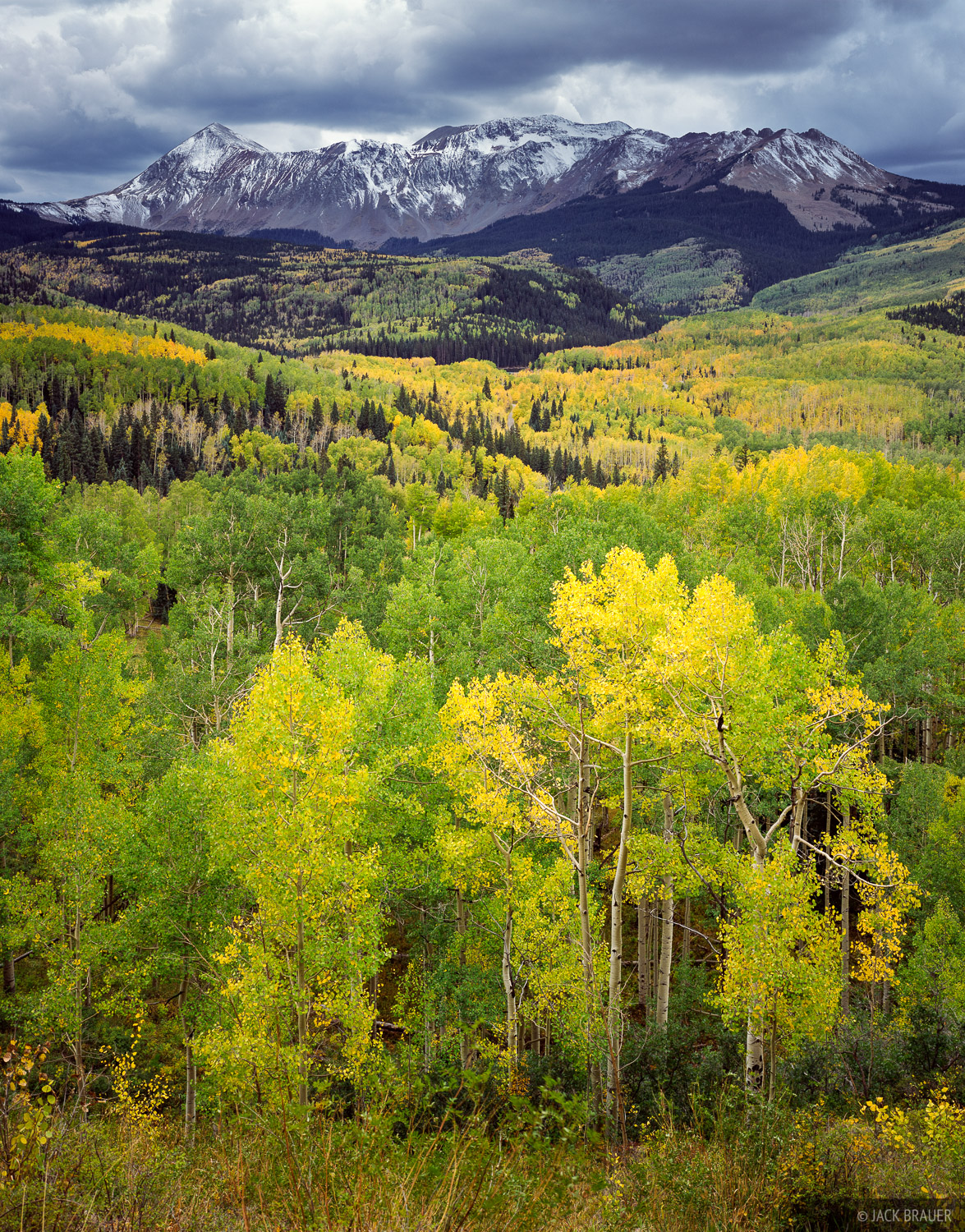 Dolores Peak, 13,290 ft., towers over vast fields of yellow and green aspens near Telluride.