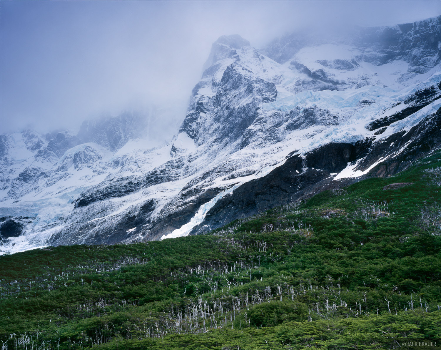 Glaciers tumble off the enormous face of Paine Grande into the lenga forest below.