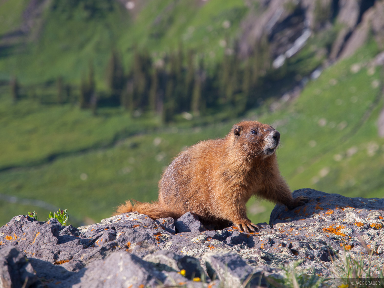 Colorado,Ice Lakes,San Juan Mountains,marmot, july, photo