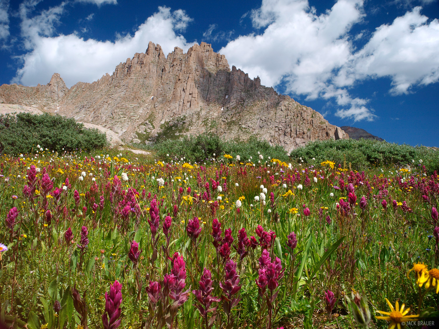 Jagged Mountain, wildflowers, Weminuche Wilderness, Colorado, photo