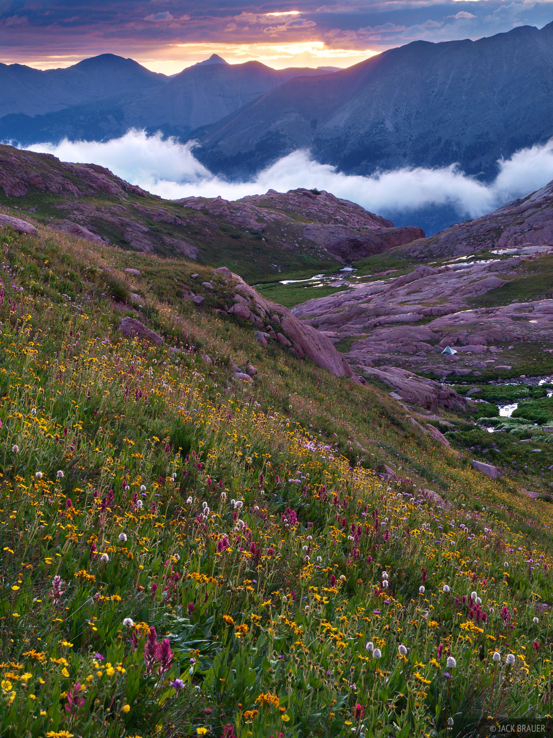 Weminuche Wilderness, wildflowers, Colorado, photo