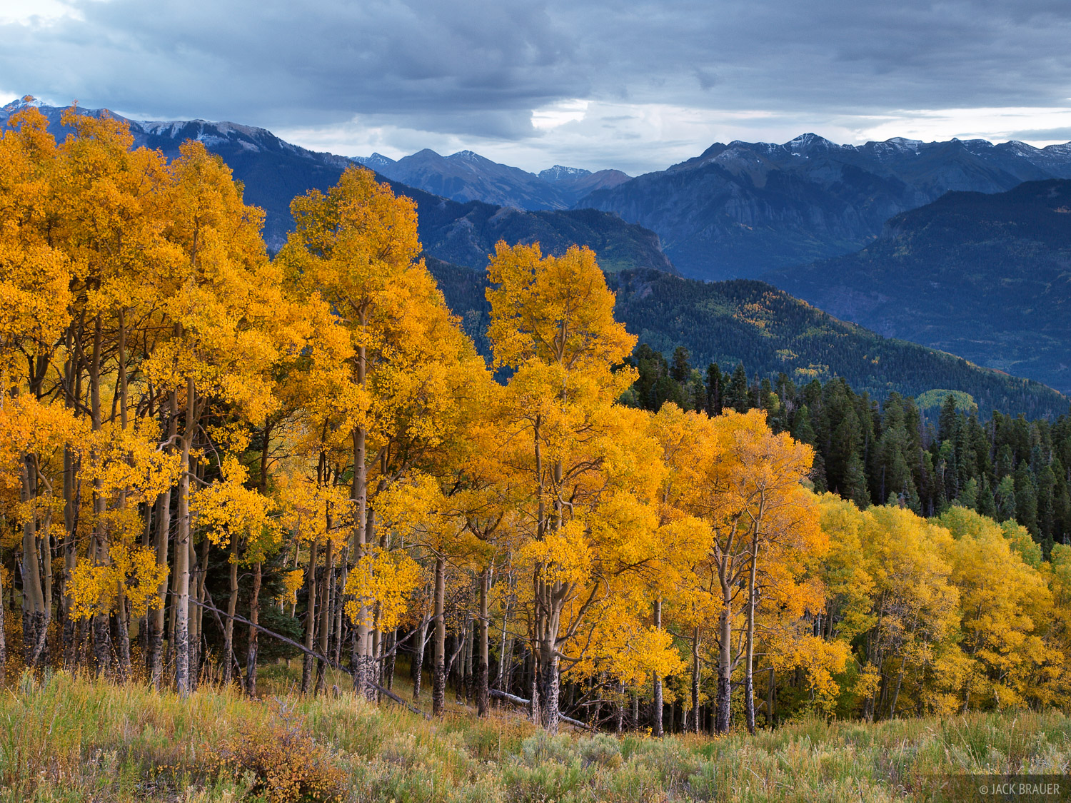 Colorado, aspens, September, photo