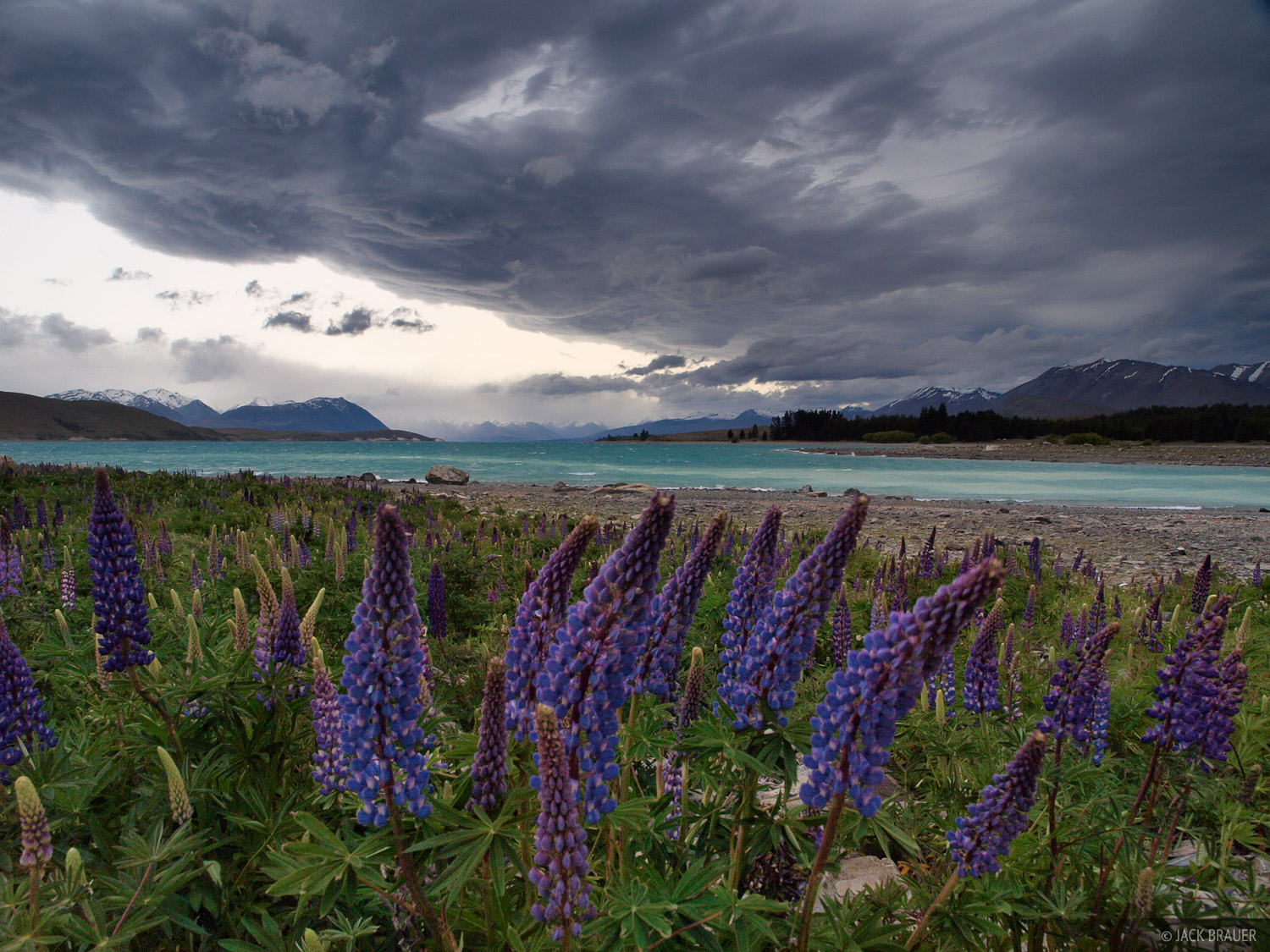 Lake Tekapo, lupines, South Island, New Zealand, photo