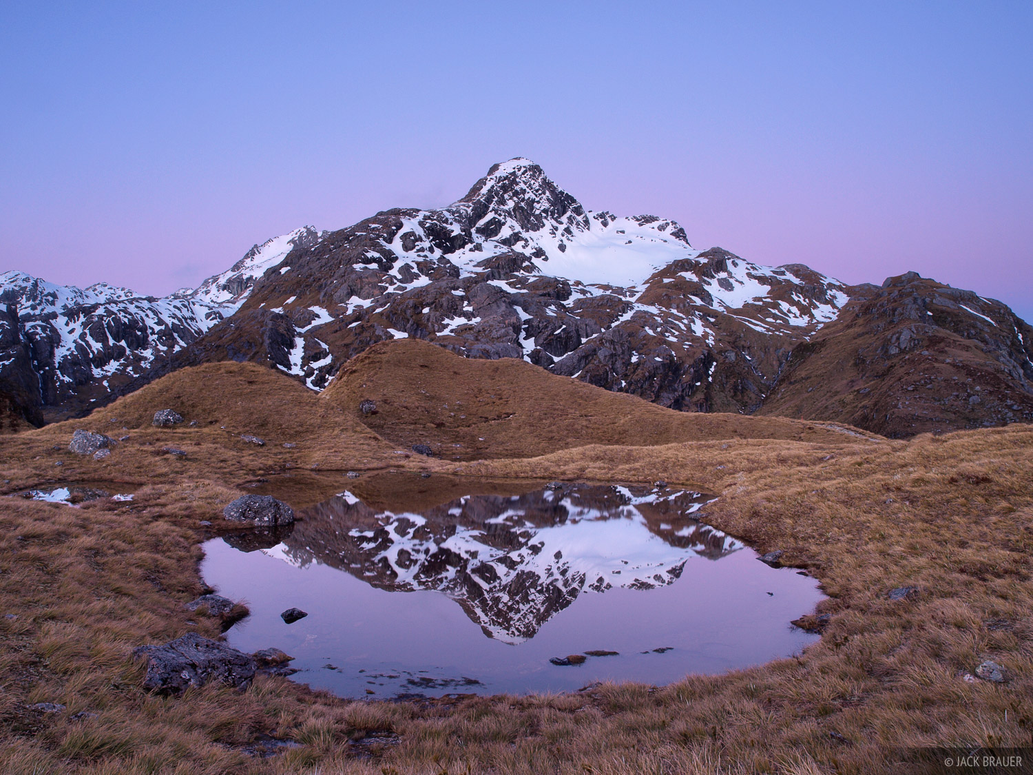 Xenicus, Harris Saddle, Routeburn, New Zealand, photo