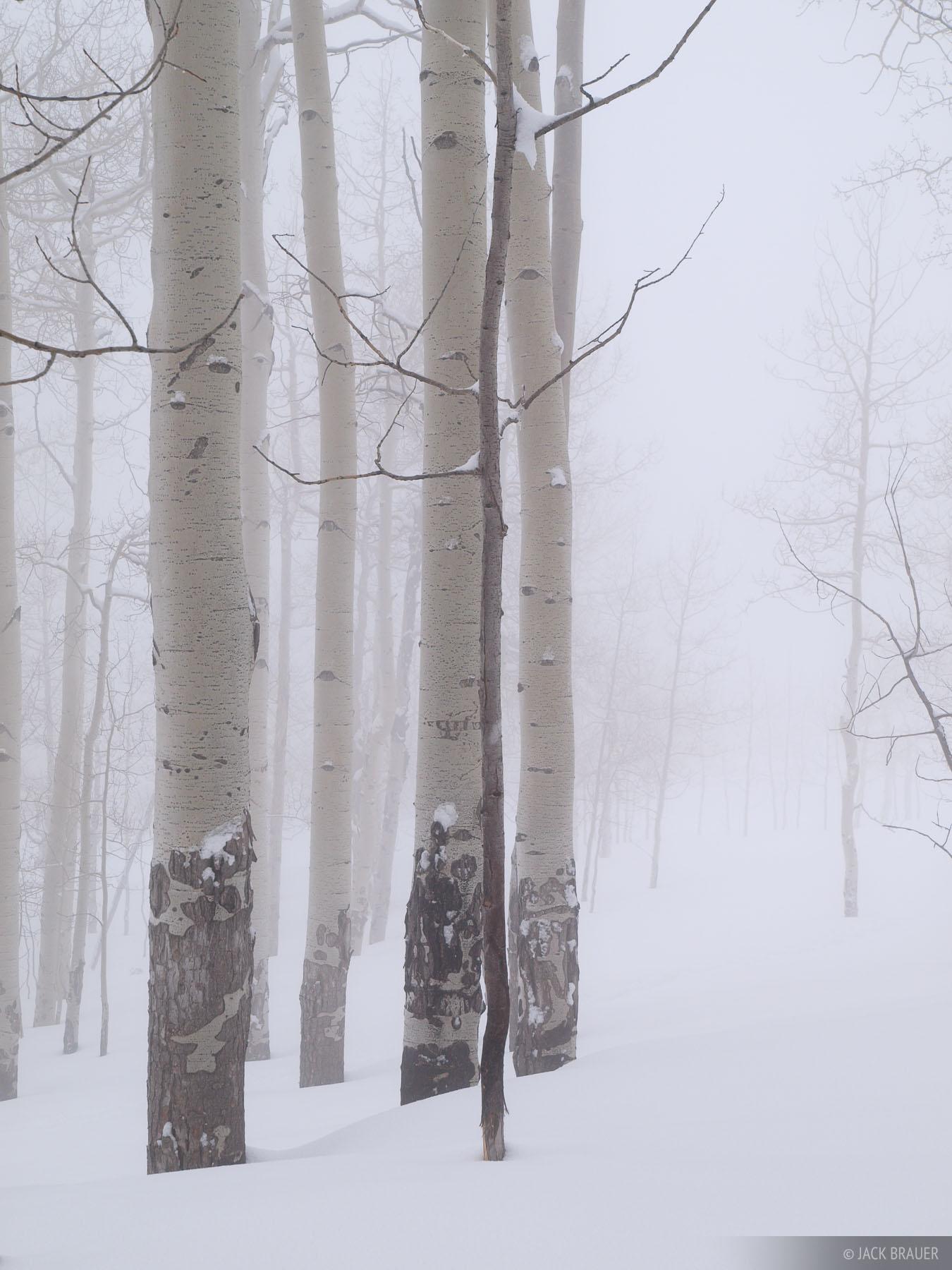 aspens, foggy, San Juans, Colorado, photo