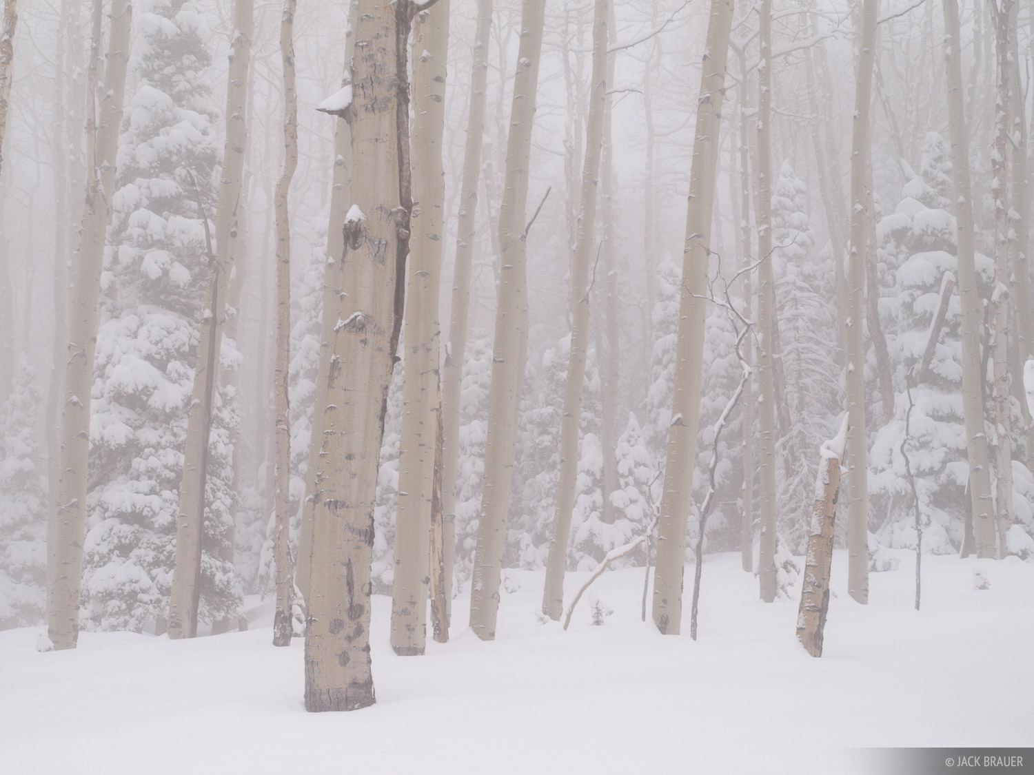 aspens, San Juan Mountains, Colorado, winter, snow, photo