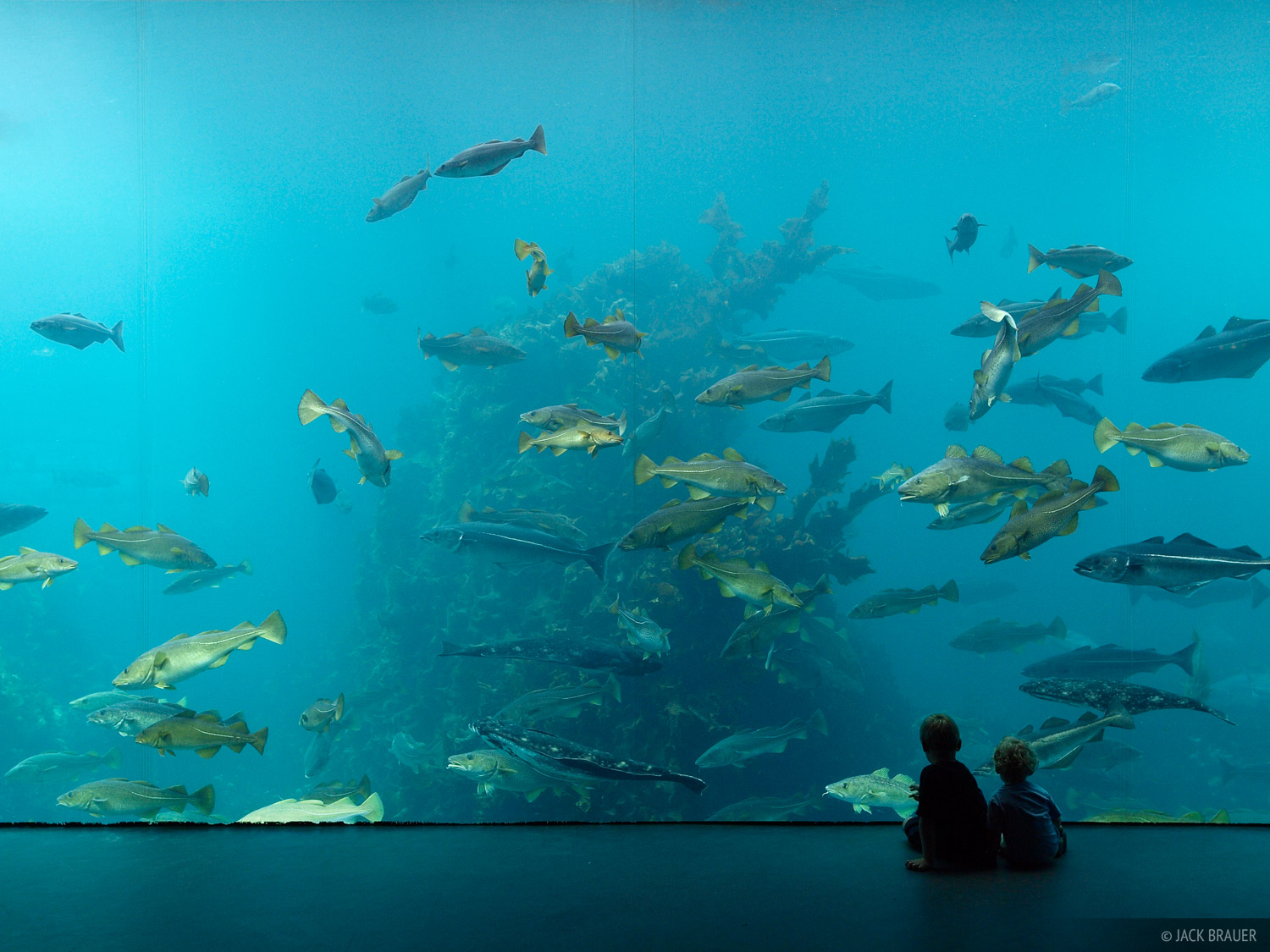 Atlanterhavsparken Aquarium.