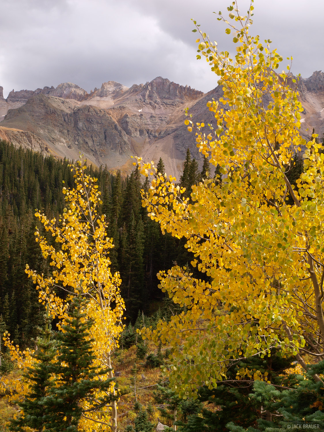 aspen, autumn, yellow, Sneffels Range, Colorado, photo