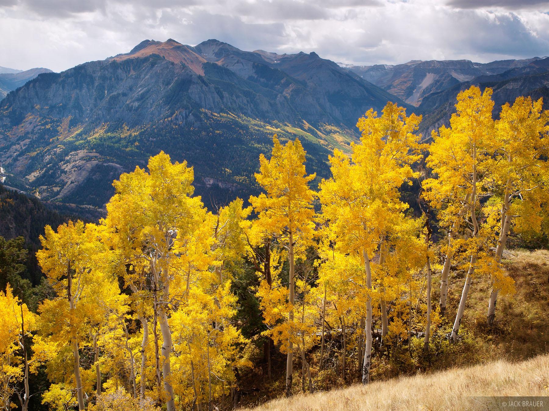 aspens, Ouray, San Juan Mountains, Colorado, September, photo