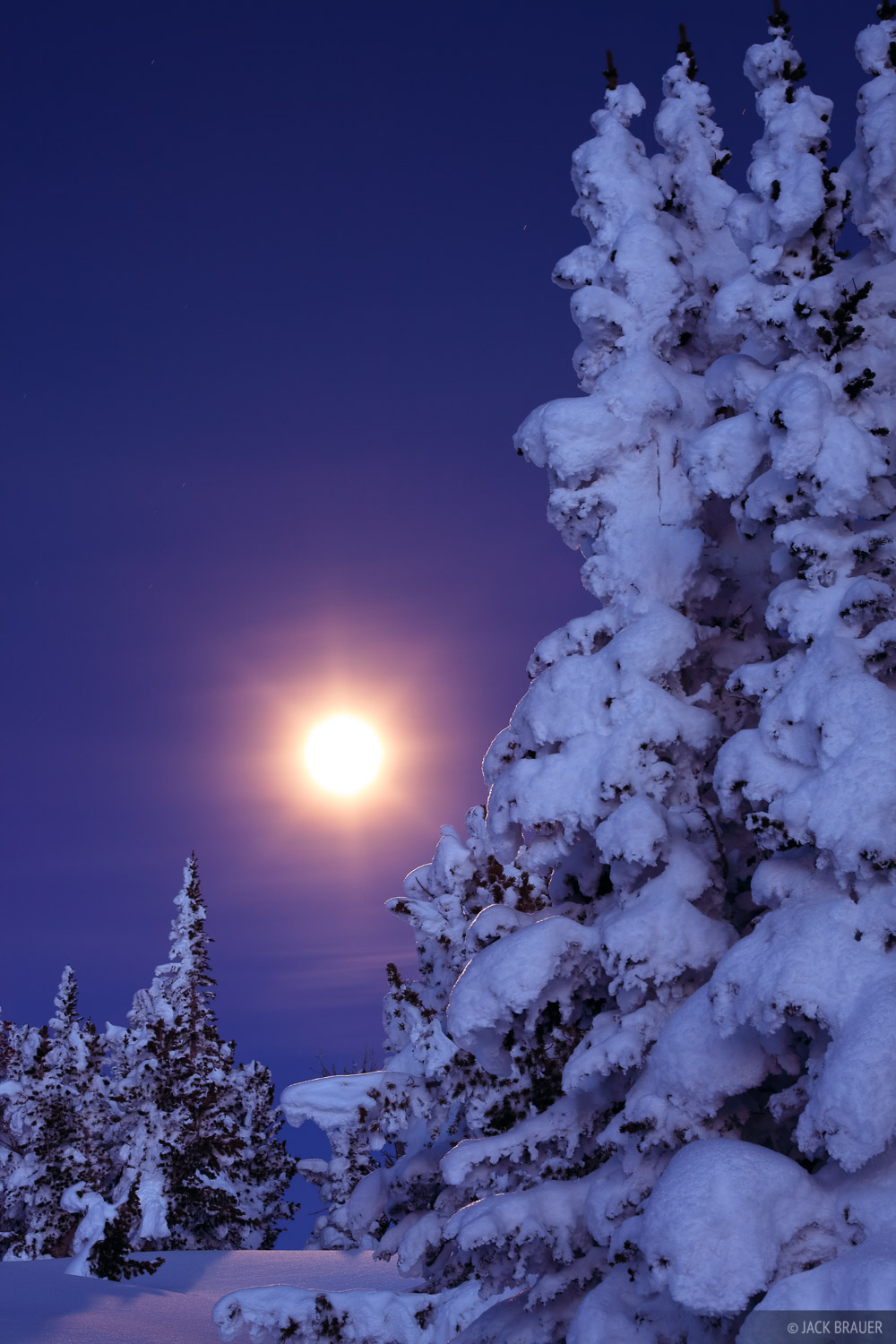 Snow smothered trees and a full moon.