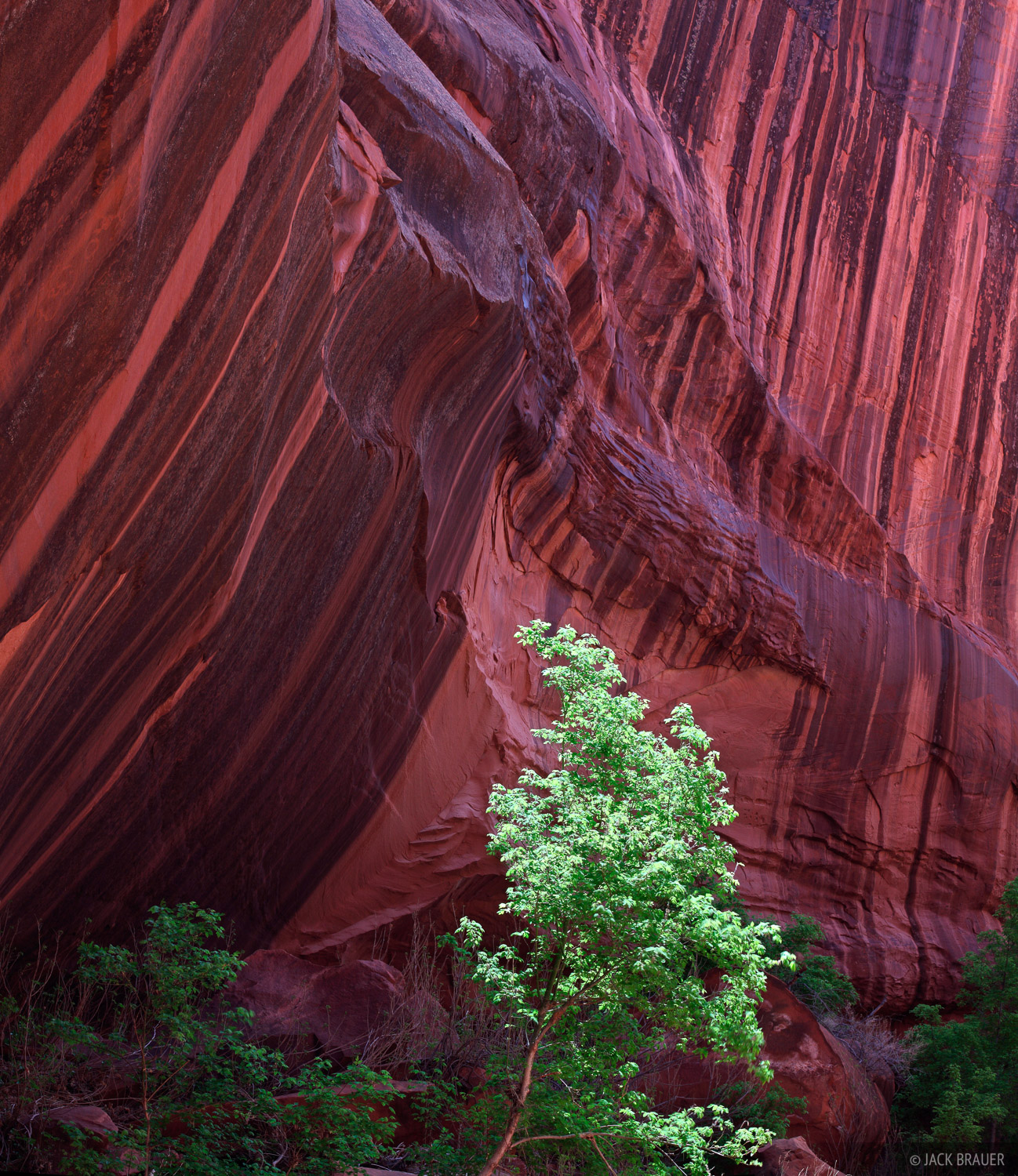 Escalante, Utah, desert varnish, canyon, Glen Canyon National Recreation Area, photo