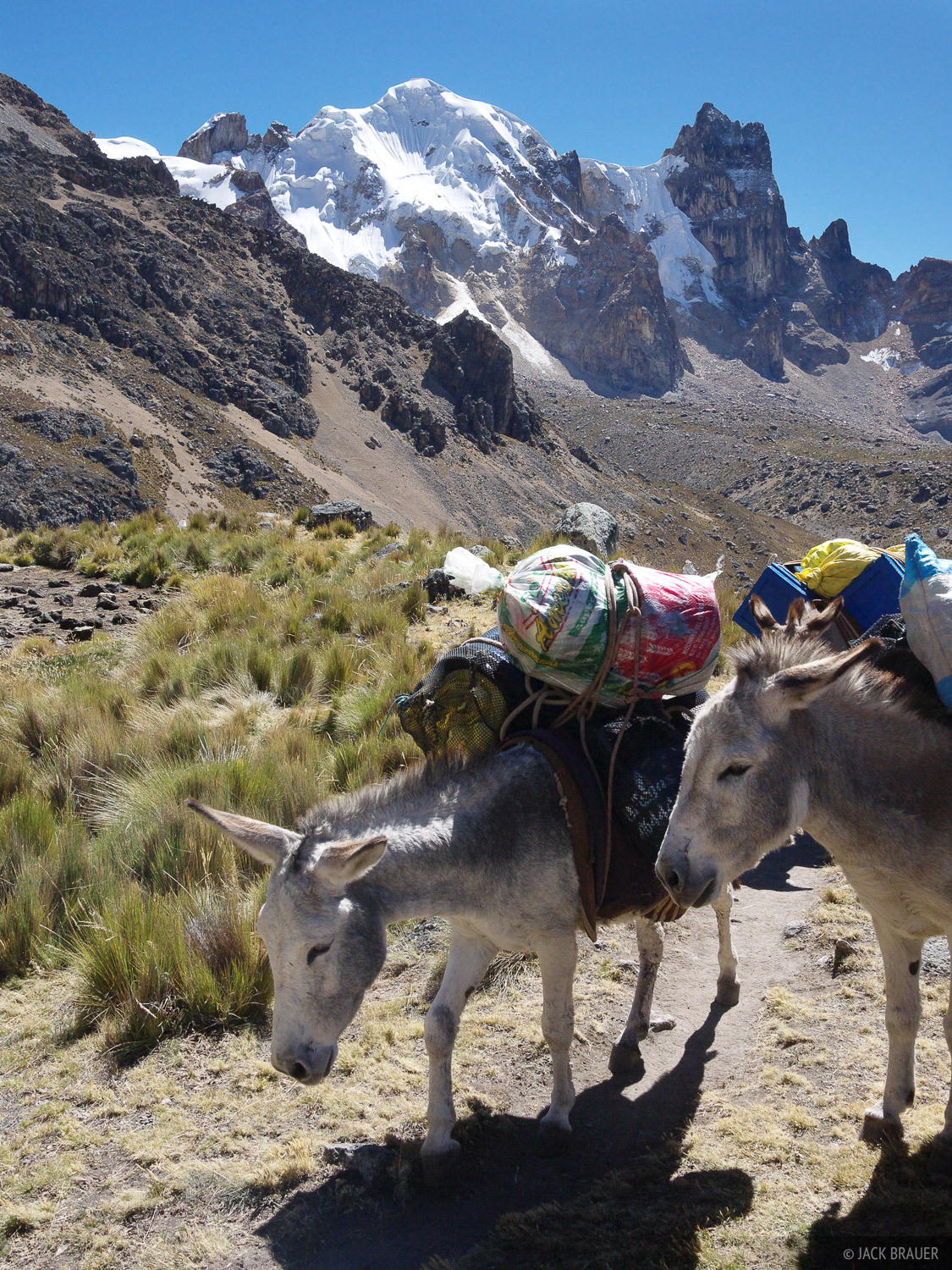 Burros hauling our stuff.