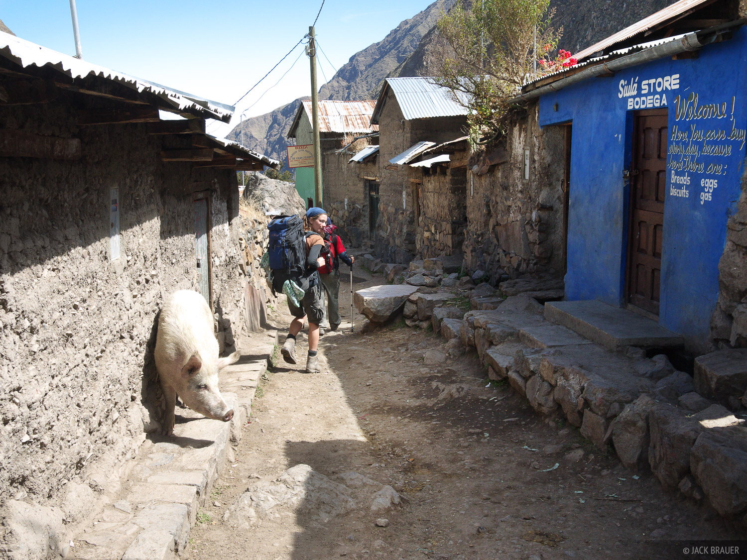 A resident pig in the village of Huayllapa.