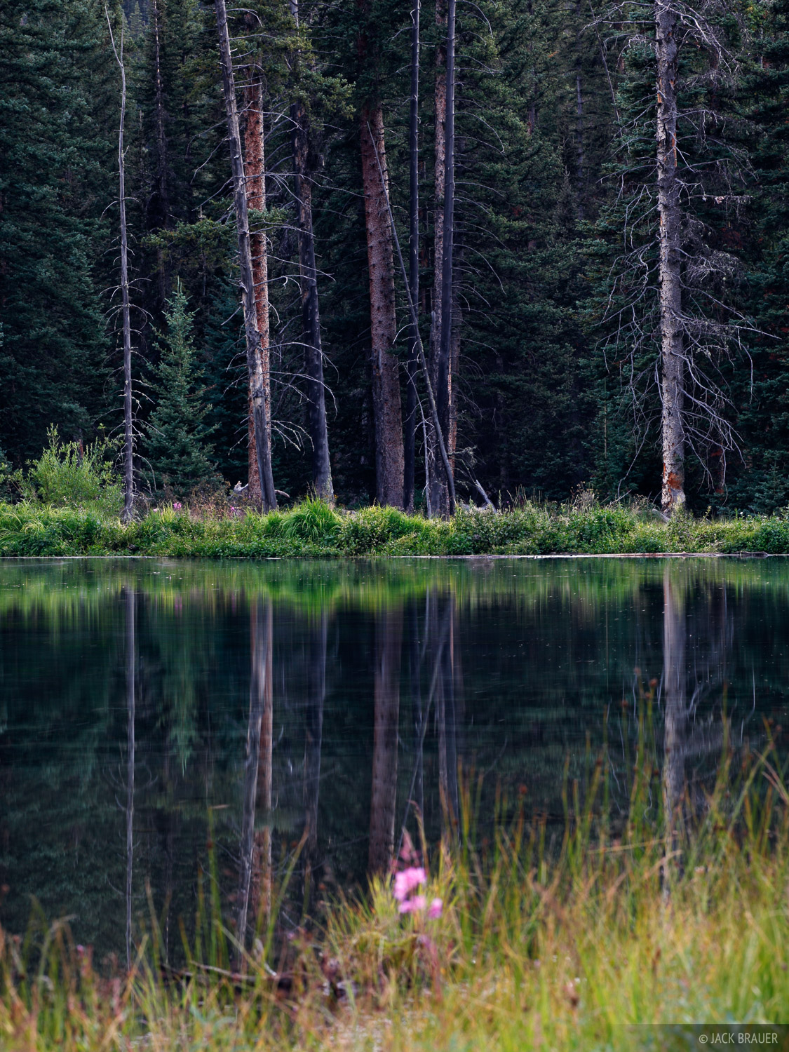 Beaver Ponds, Weminuche Wilderness, Colorado, photo