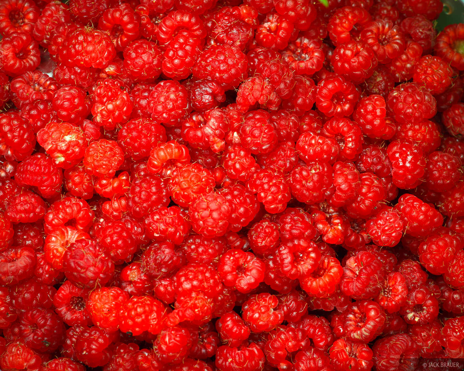 A bowl full of delicious wild raspberries. When we came upon these bushes full of raspberries we dropped our backpacks and picked...