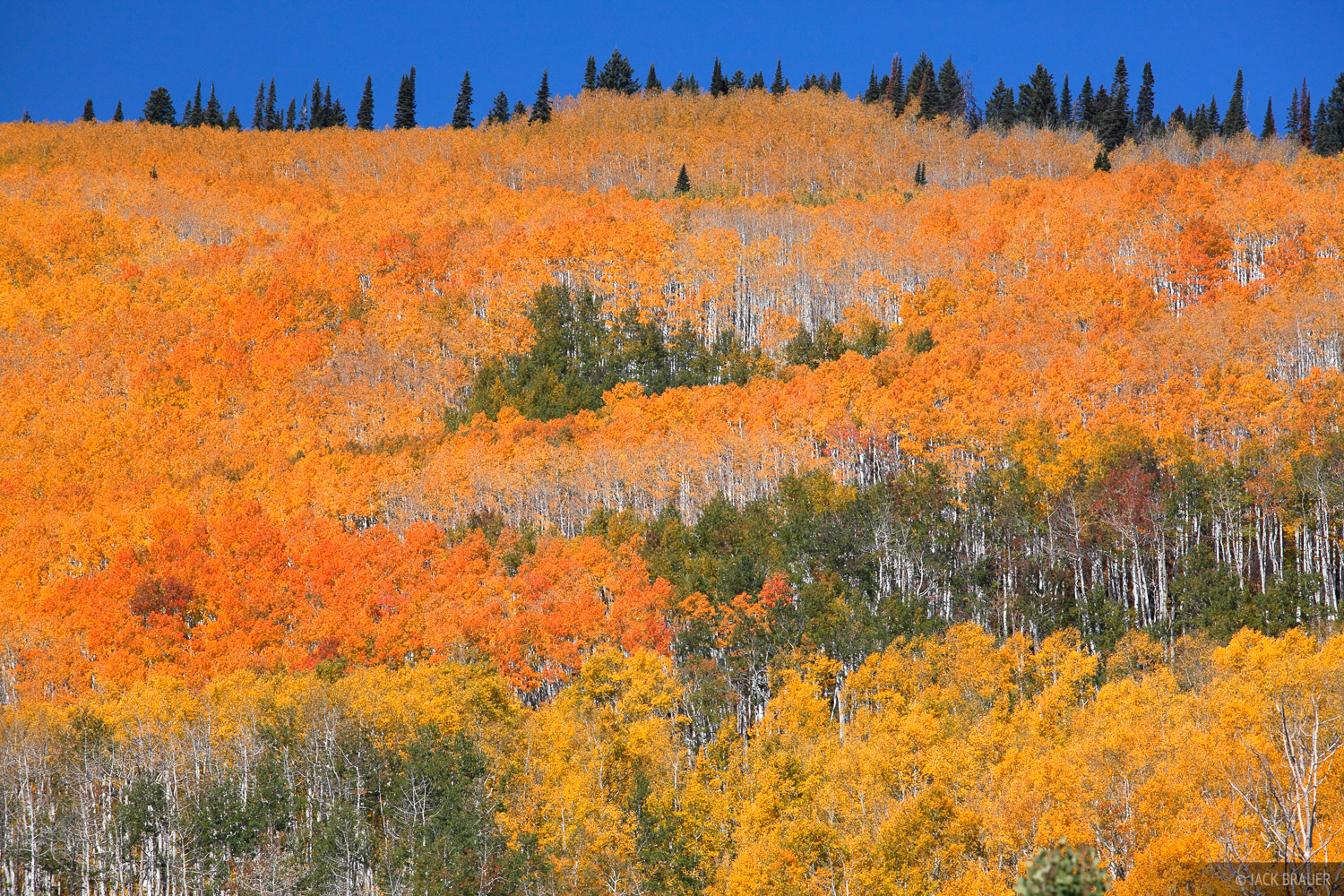 Grand Mesa, Colorado, orange, aspens, October, photo
