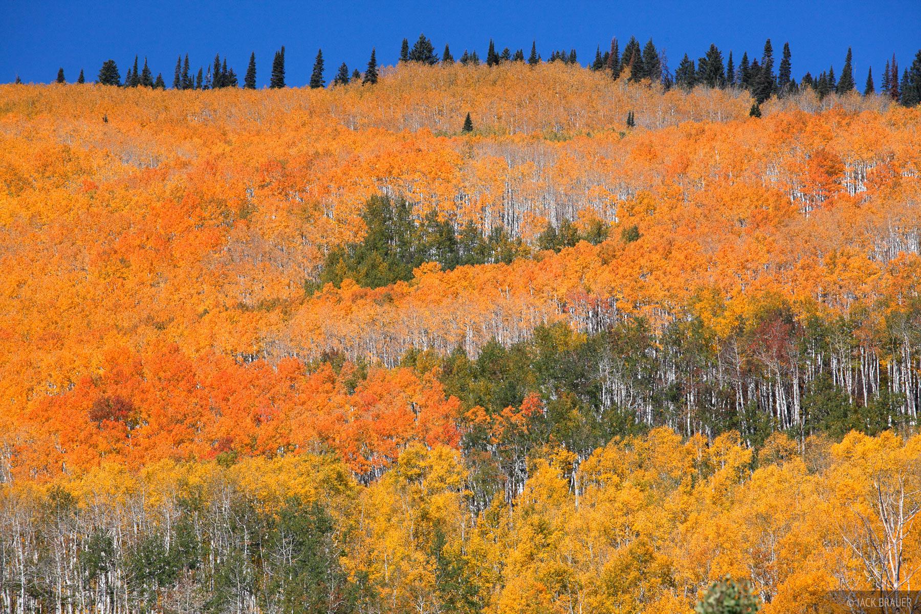 Grand Mesa, Colorado, orange, aspens, October, photo