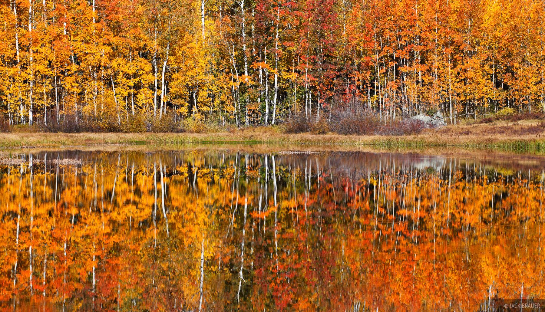 aspen, San Juan Mountains, Colorado, autumn, October, photo