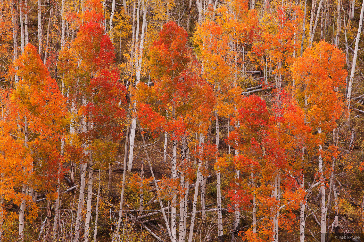 Dallas Divide, Sneffels Range, San Juan Mountains, Colorado, autumn, aspens, photo