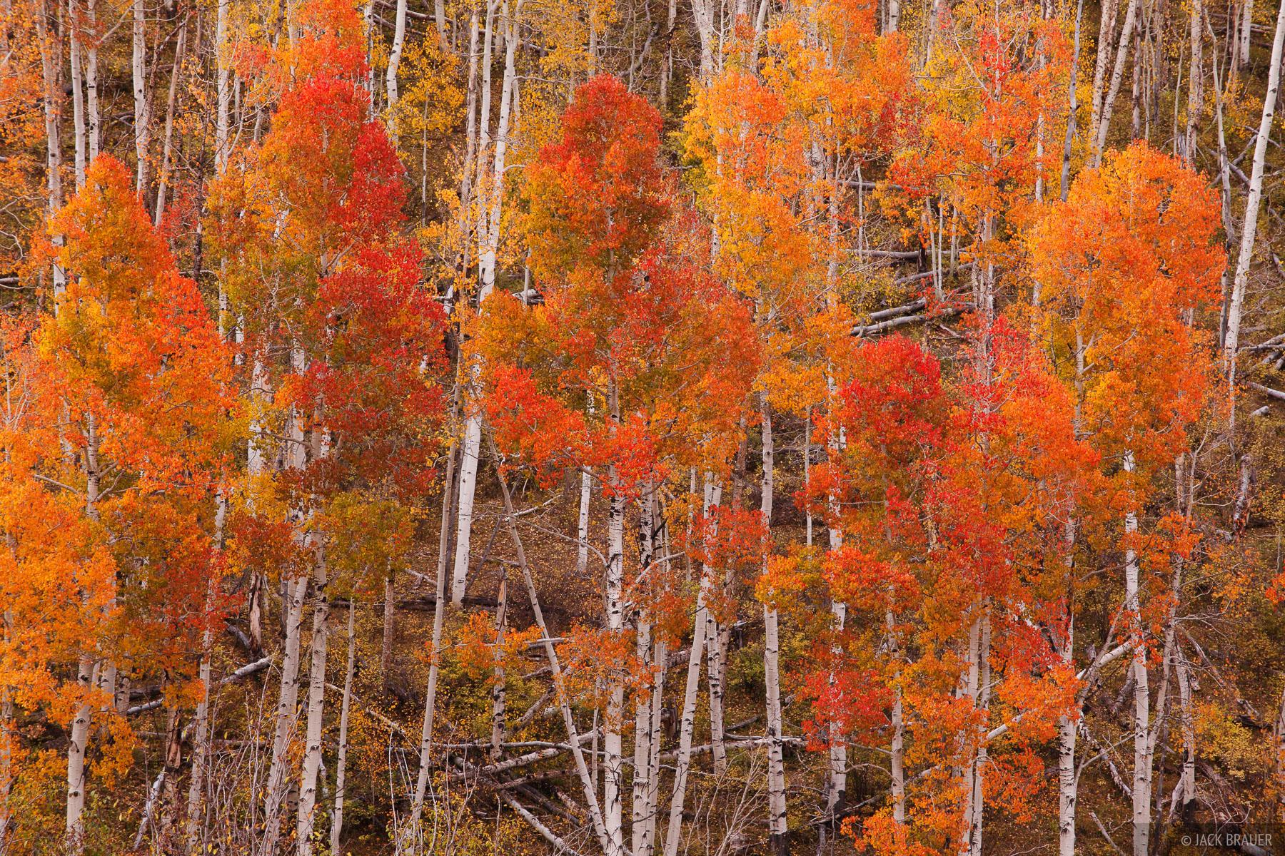 Dallas Divide, Sneffels Range, San Juan Mountains, Colorado, autumn, aspens, photo