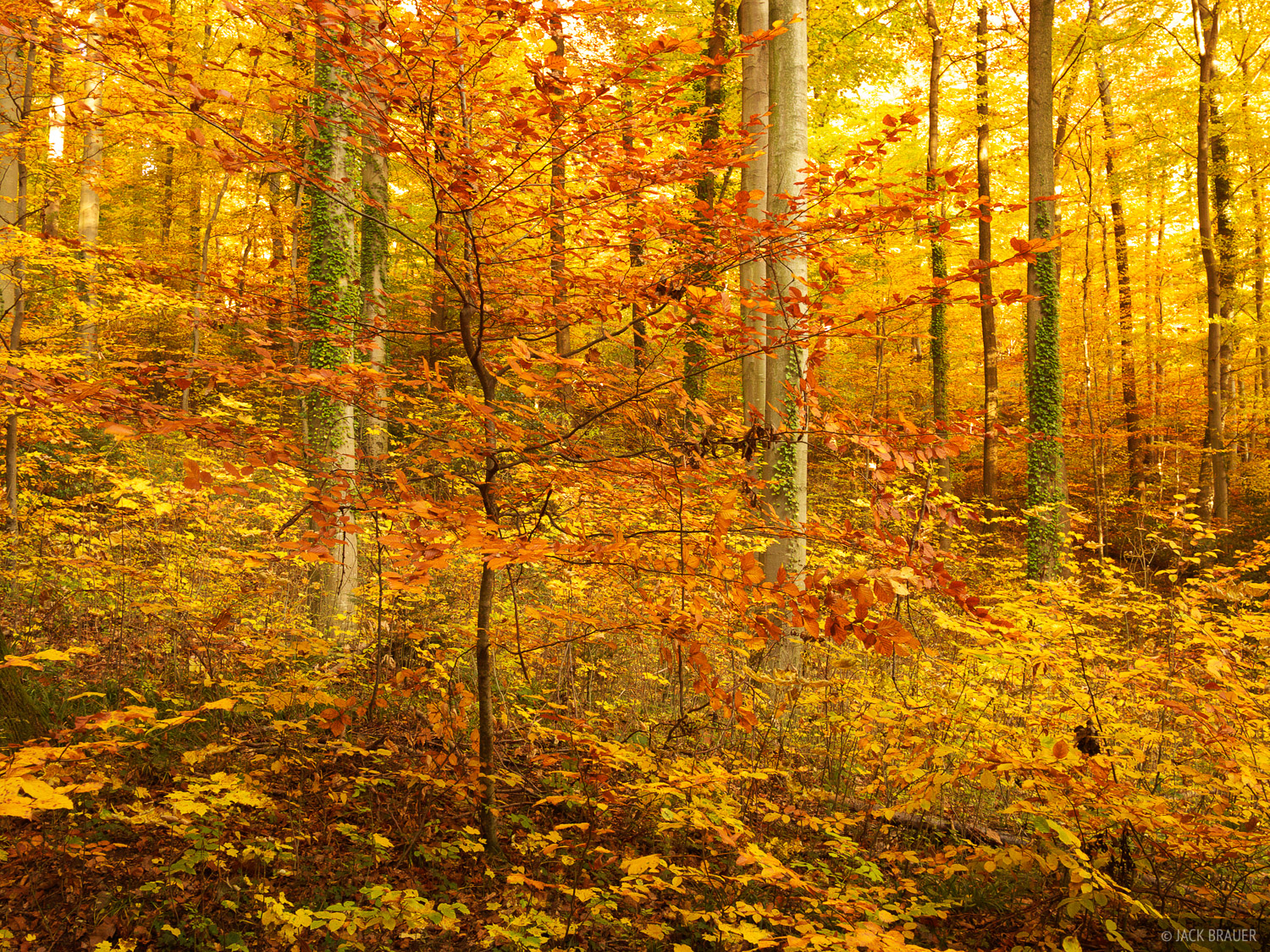 Brilliant autumn colors in the Black Forest near Freiburg, Germany.