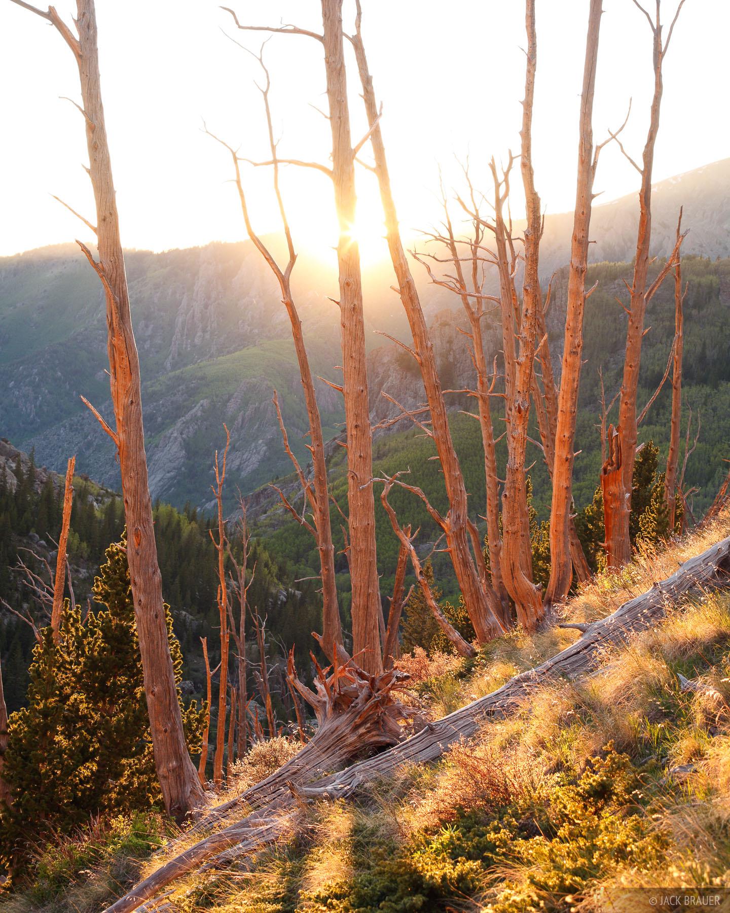 Sangre de Cristo, Colorado, North Crestone, sunset, June, Sangre de Cristo Wilderness, photo
