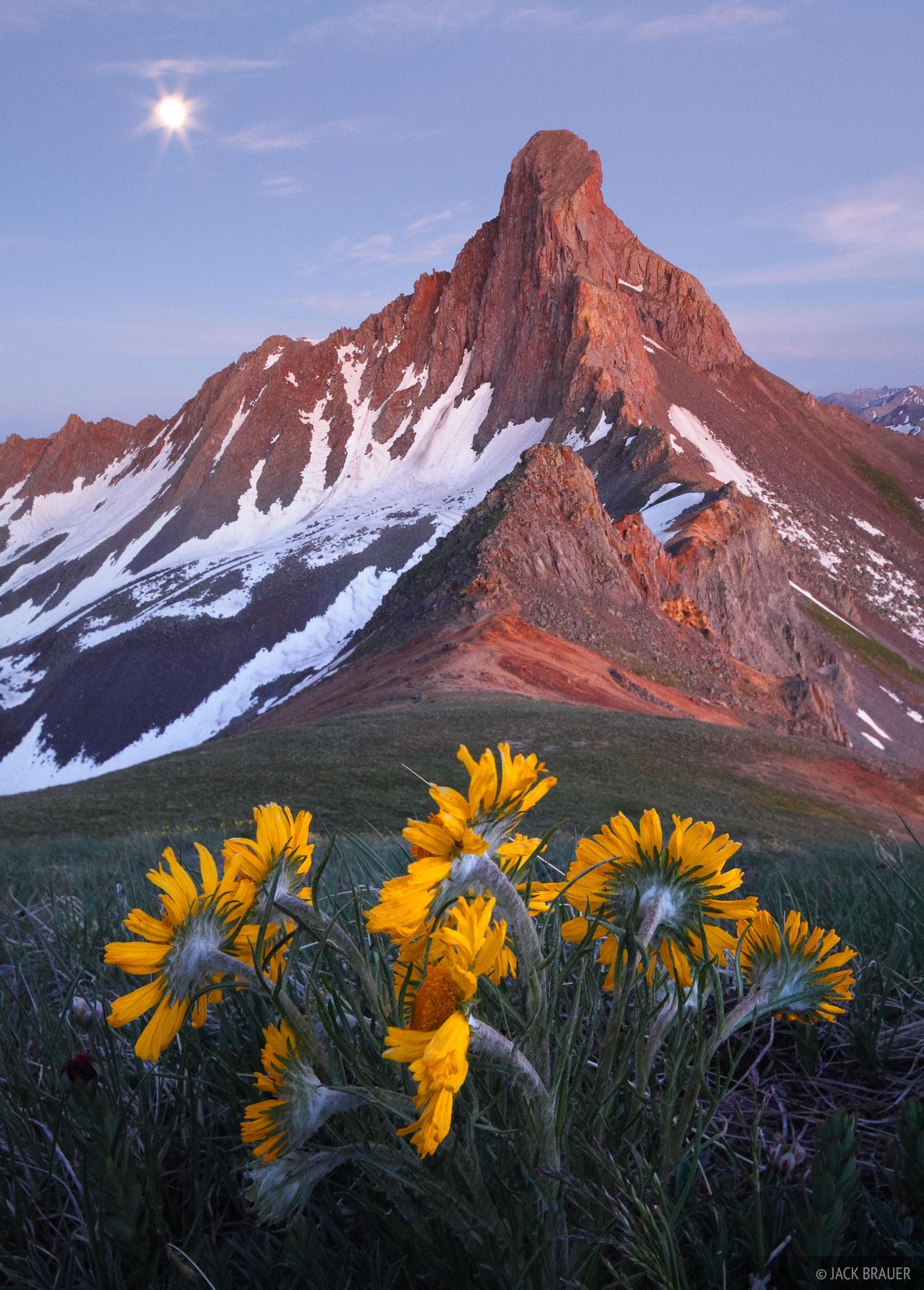 Moon, sunflowers, and Wetterhorn Peak, in the dusk glow in July.