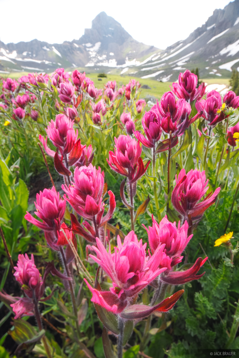 Wetterhorn Basin, wildflowers, July, San Juan Mountains, Colorado, photo