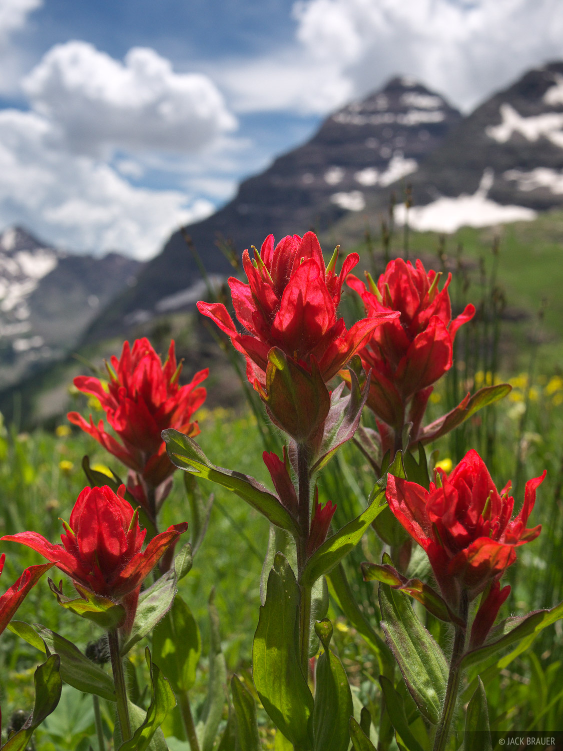 Indian Paintbrush, Buckskin Pass, North Maroon Peak, Elk Mountains, Colorado, Maroon Bells-Snowmass Wilderness, photo