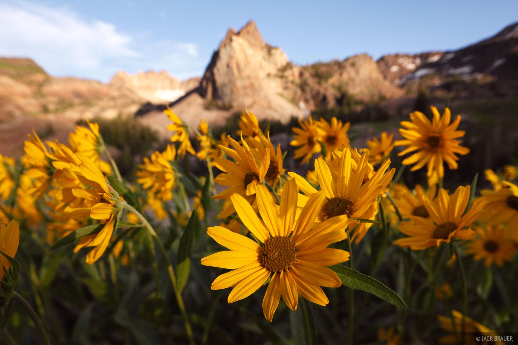 Sundial Peak, Wildflowers, Wasatch Range, Utah, photo