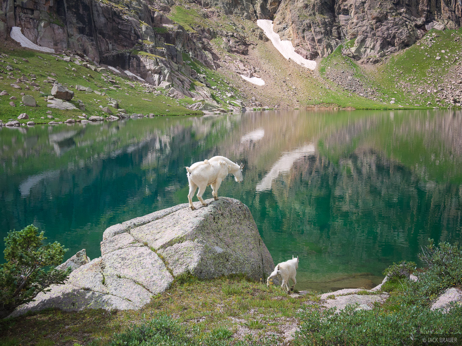 mountain goat, San Juan Mountains, Colorado, Sunlight Lake, photo