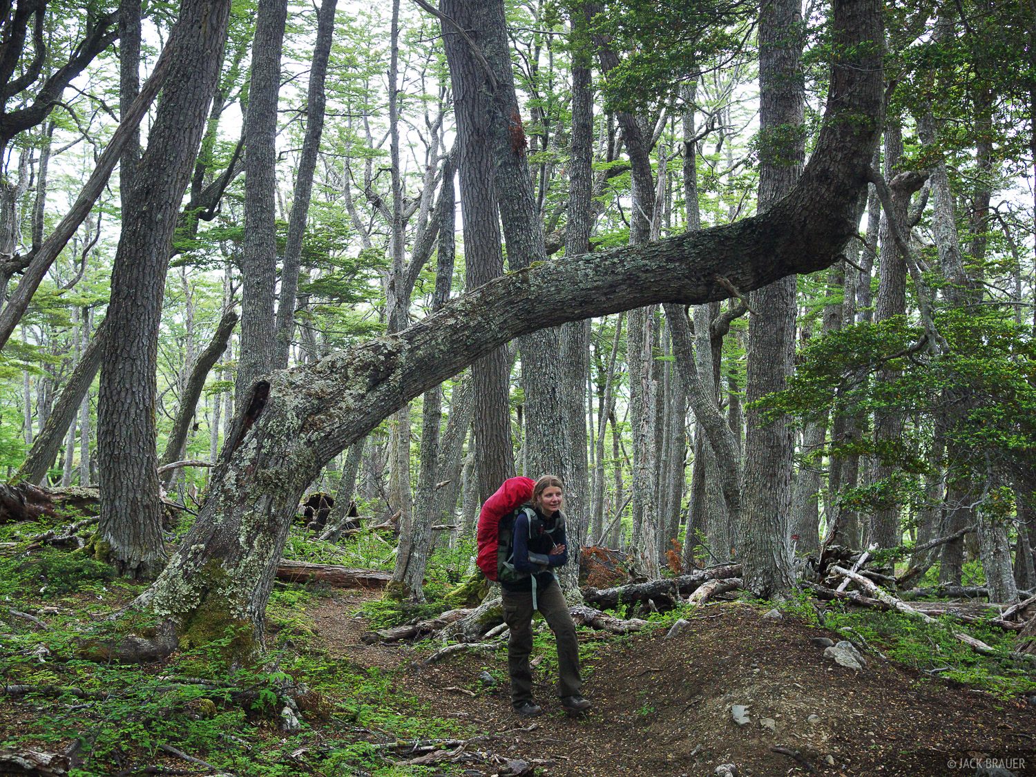 Chile, Isla Navarino, South America, Tierra del Fuego, forest, hiking, photo