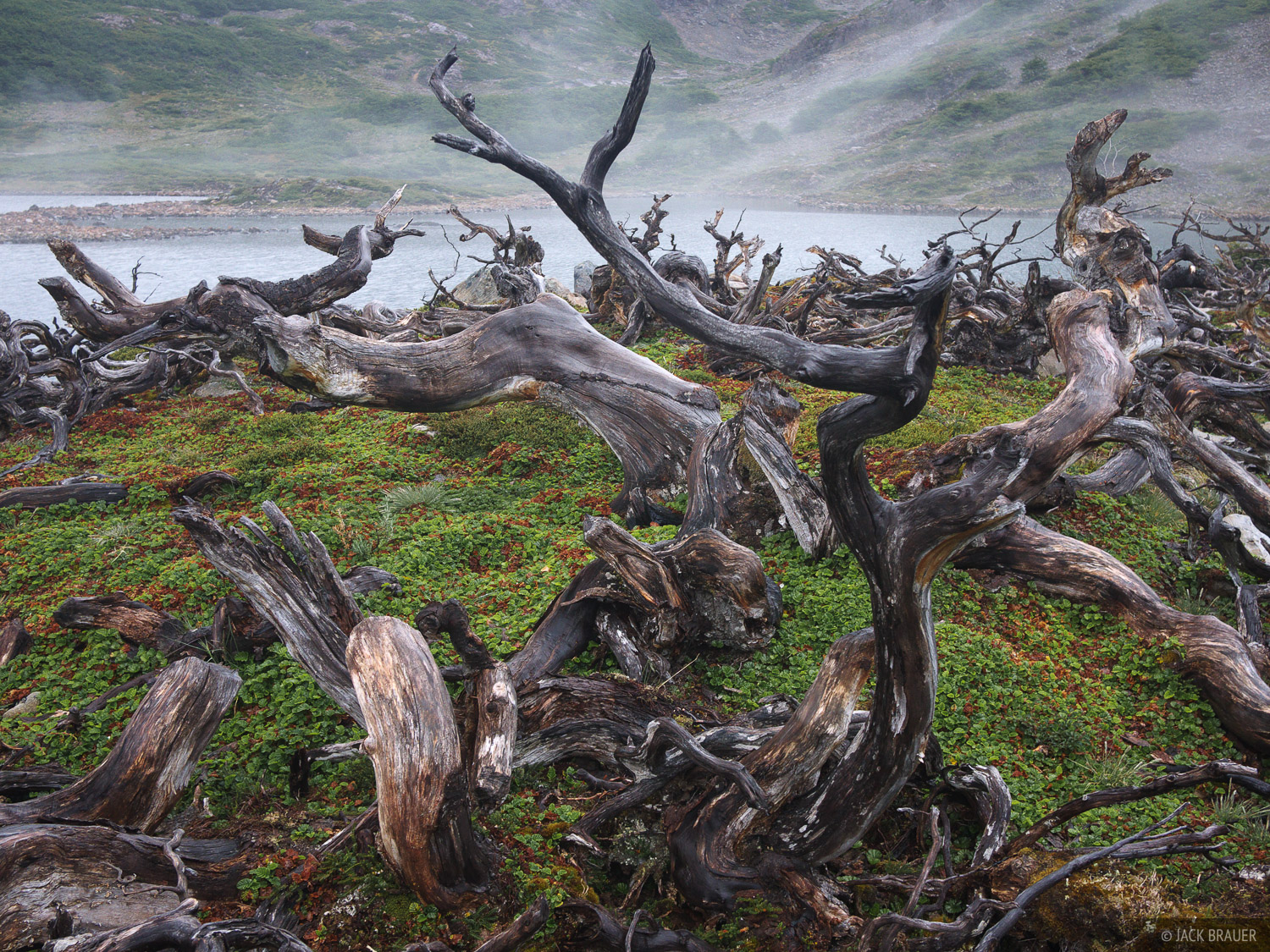 Chile, Isla Navarino, South America, Tierra del Fuego, beaver damage, photo