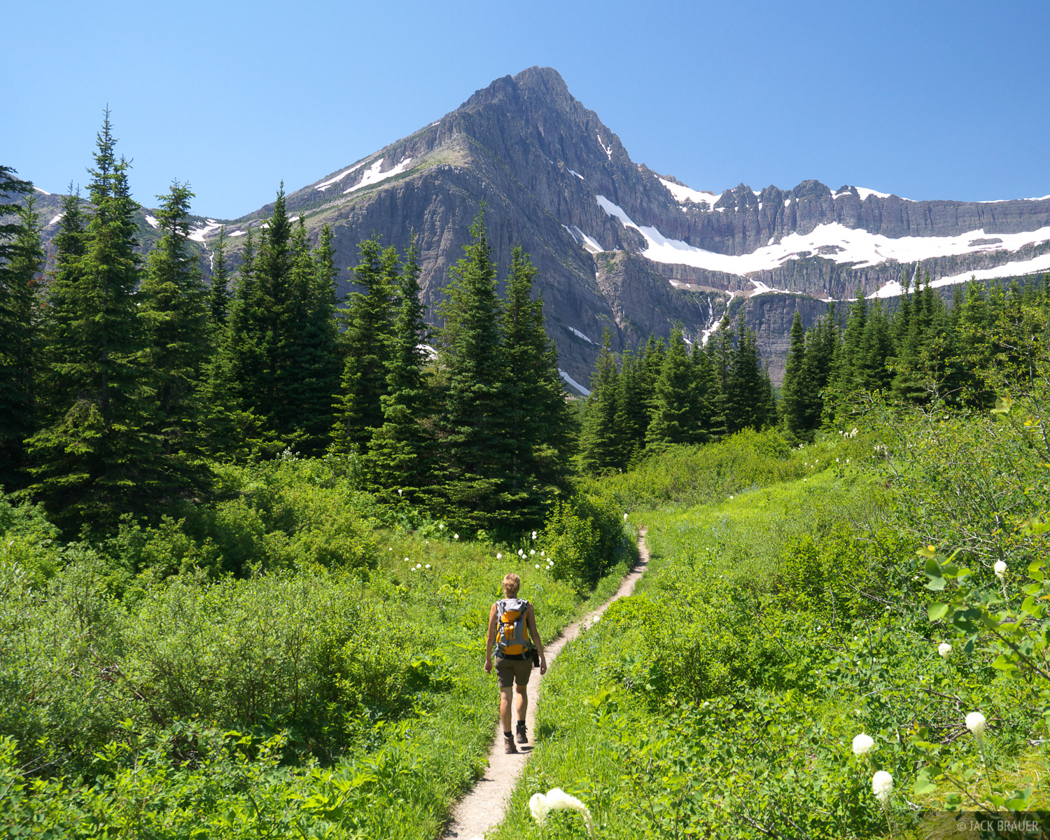 Swiftcurrent Pass Trail, hiking, Glacier National Park, Montana, july, photo
