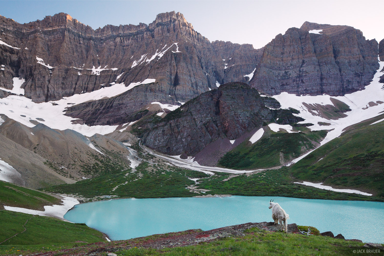 mountain goat, Cracker Lake, Glacier National Park, Montana, photo