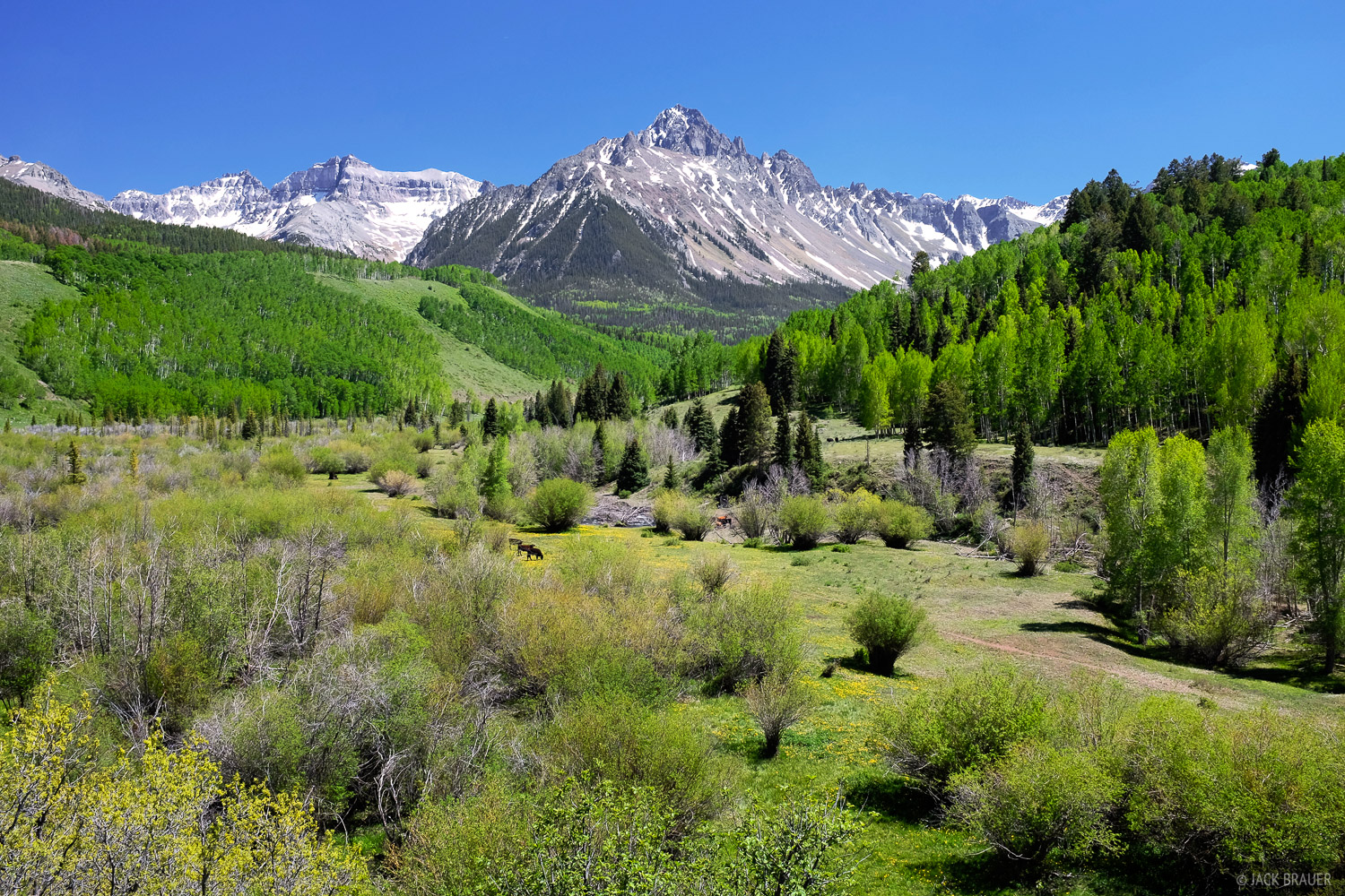Mt. Sneffels and the brilliant spring greens as seen from County Road 7.