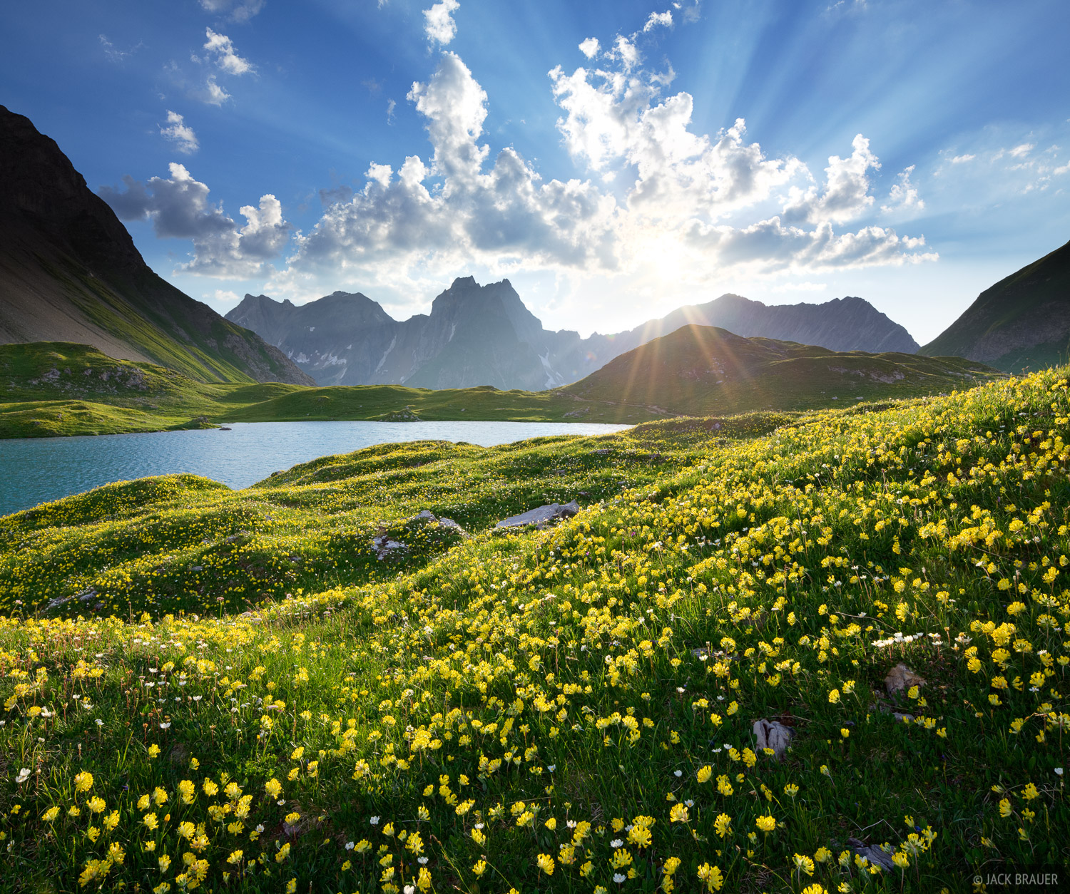 Lechtal Alps, Austria, wildflowers, Memminger H, photo