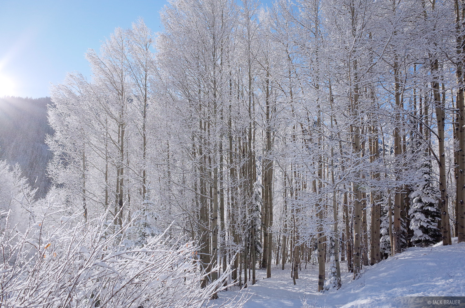 San Juan Mountains, Colorado, aspens, winter, skiing, photo