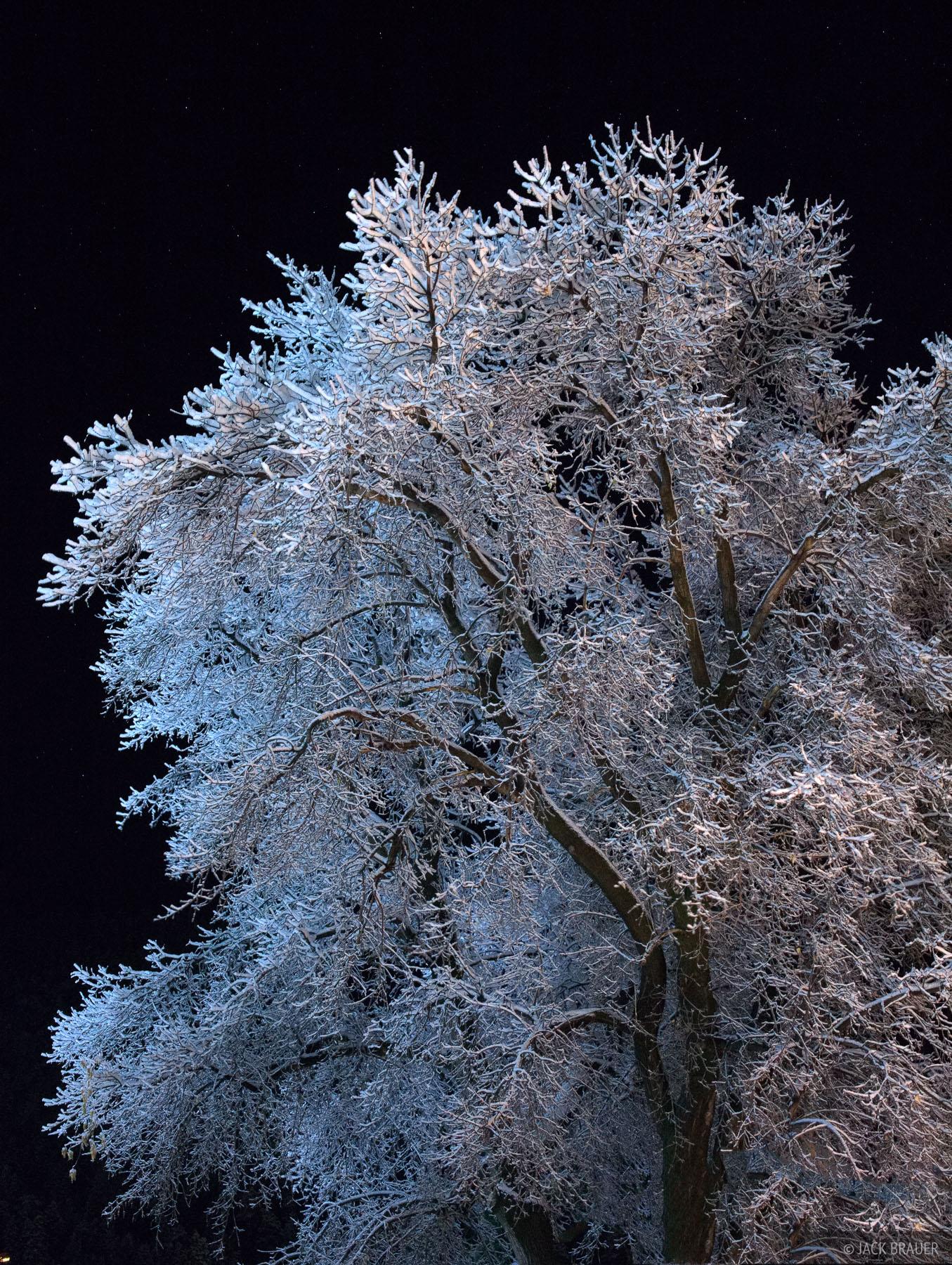 Colorado, frosty, tree, October, snow, photo
