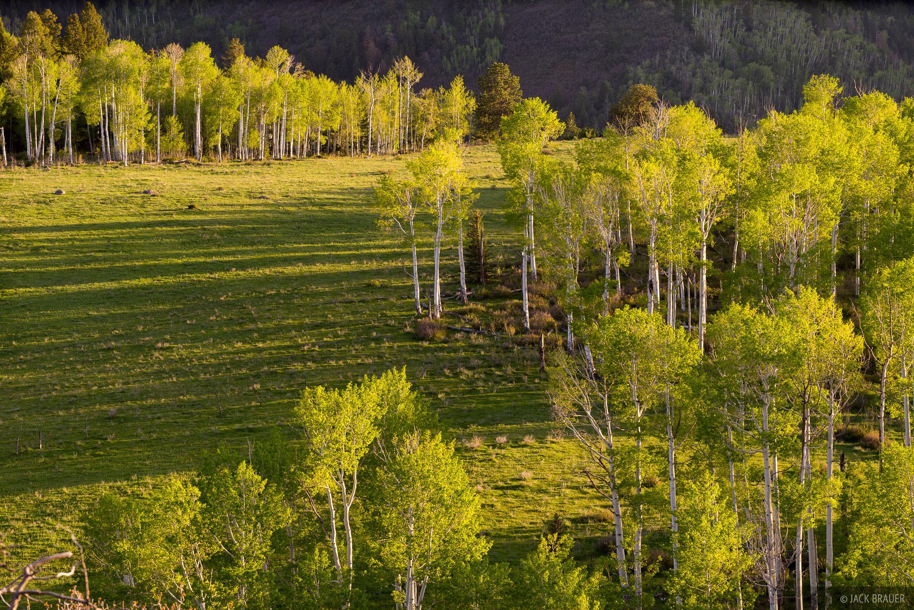 Colorado,San Juan Mountains,Sneffels Range, aspens, spring, sunset, photo