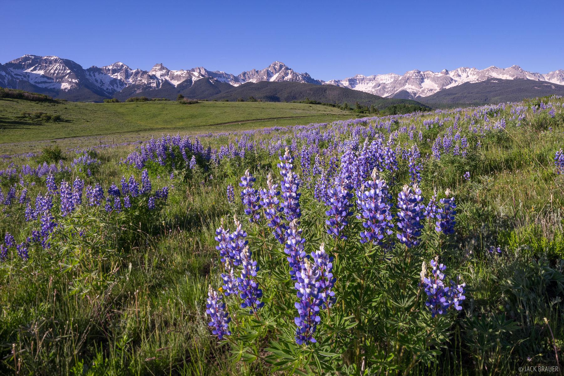 Colorado,San Juan Mountains,Sneffels Range, lupine, wildflowers, June, photo