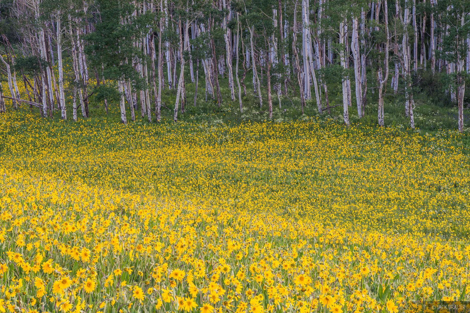 Colorado,San Juan Mountains,wildflowers, photo