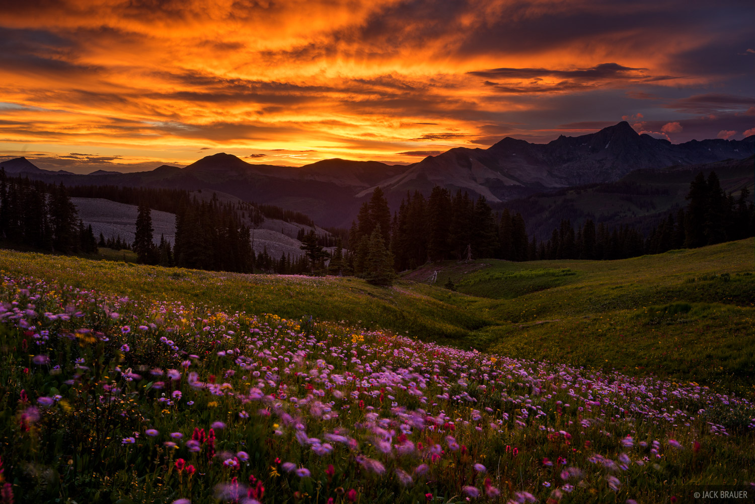 Colorado,Grizzly Peak,San Juan Mountains,wildflowers, sunset, photo