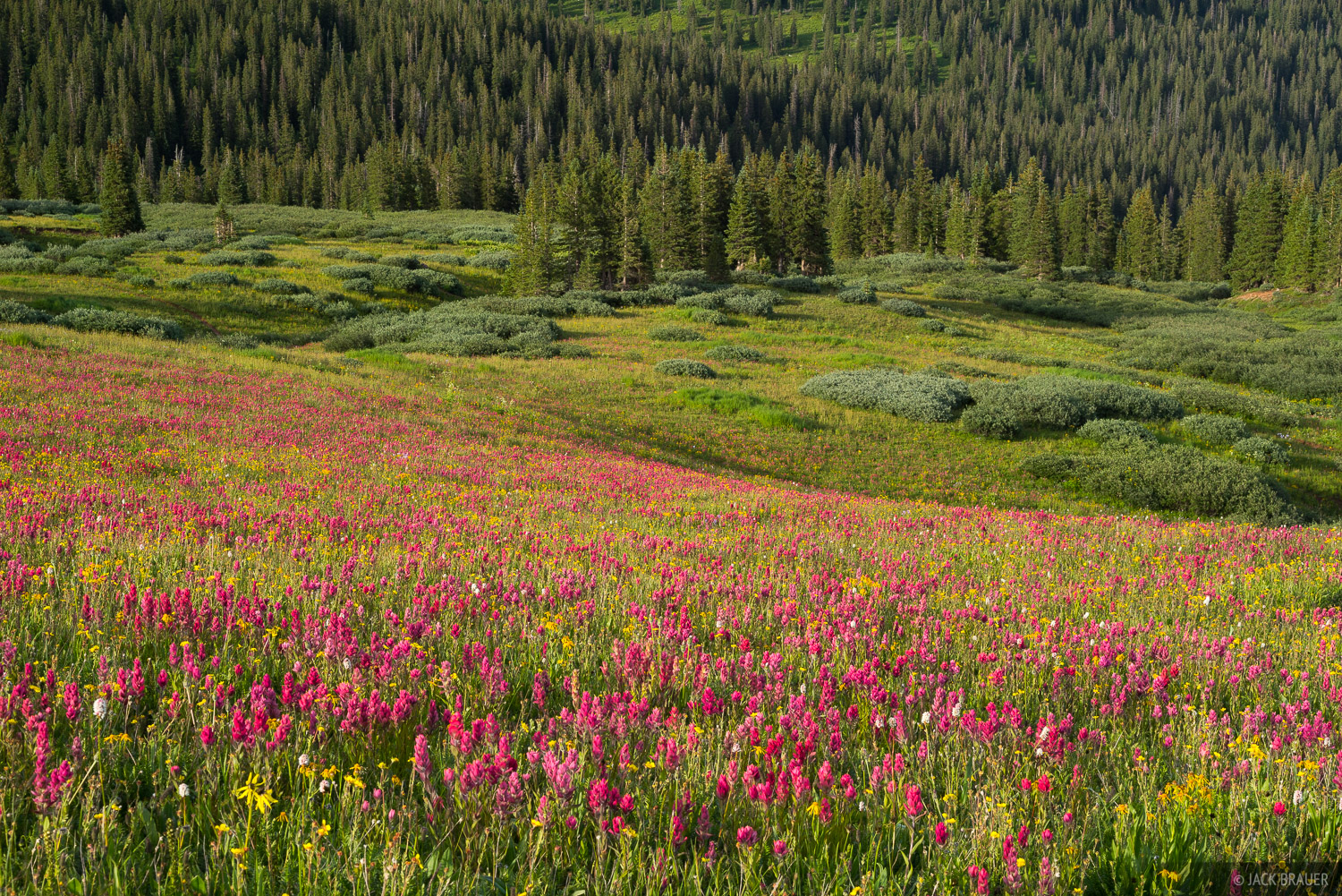 Colorado,San Juan Mountains,wildflowers, photo