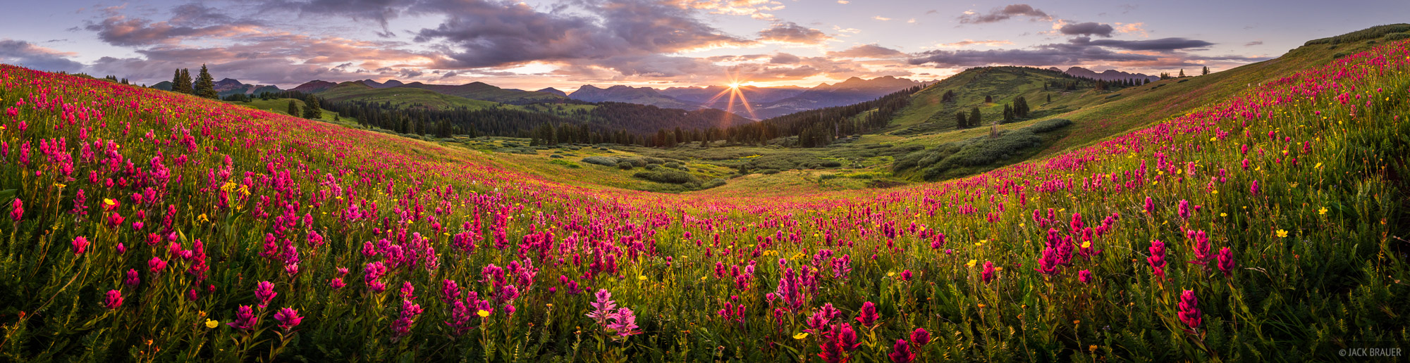 Colorado,Engineer Mountain,San Juan Mountains,wildflowers, panorama, sunrise, photo