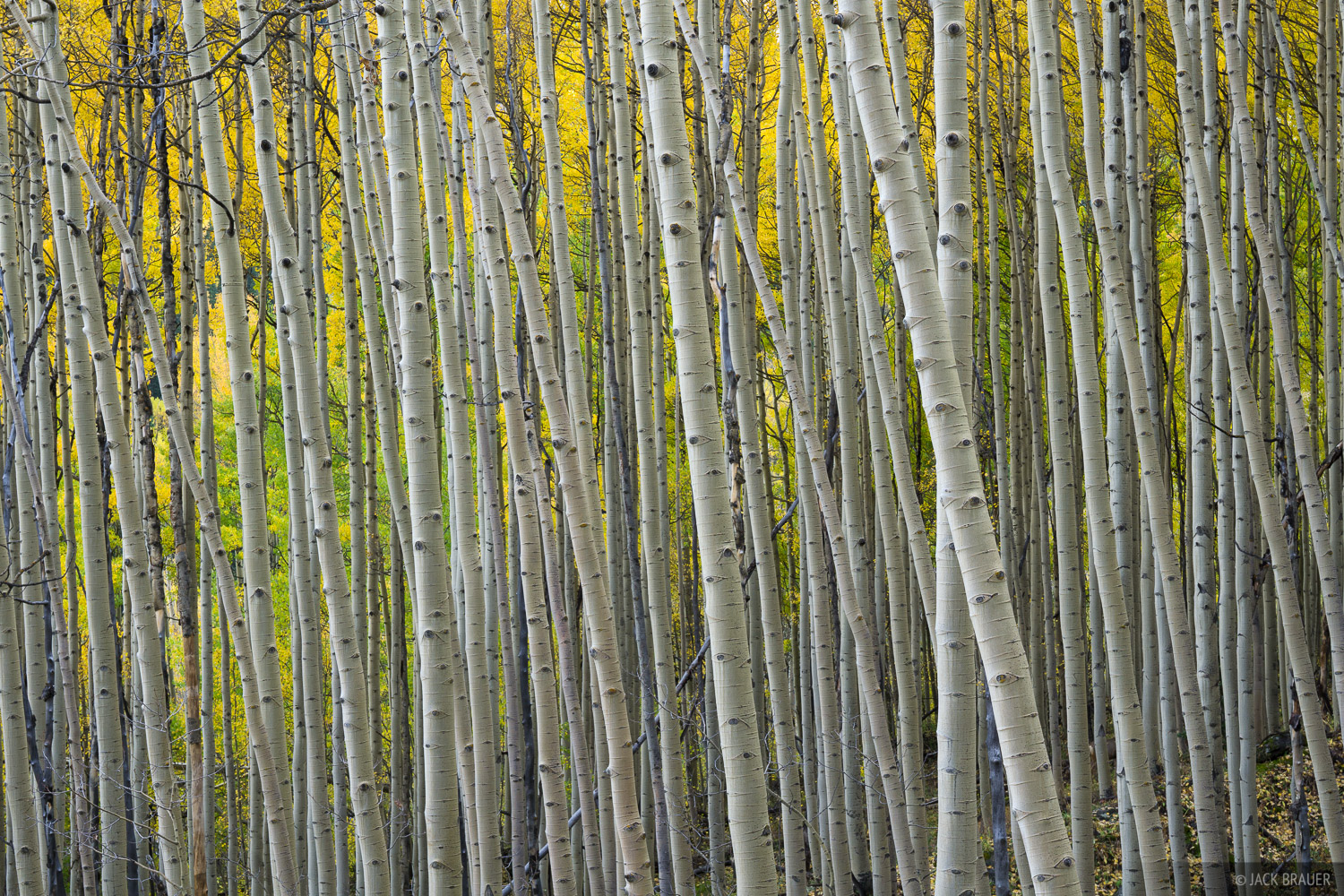 Colorado, San Juan Mountains, aspens, September, autumn, abstract, forest, 2014