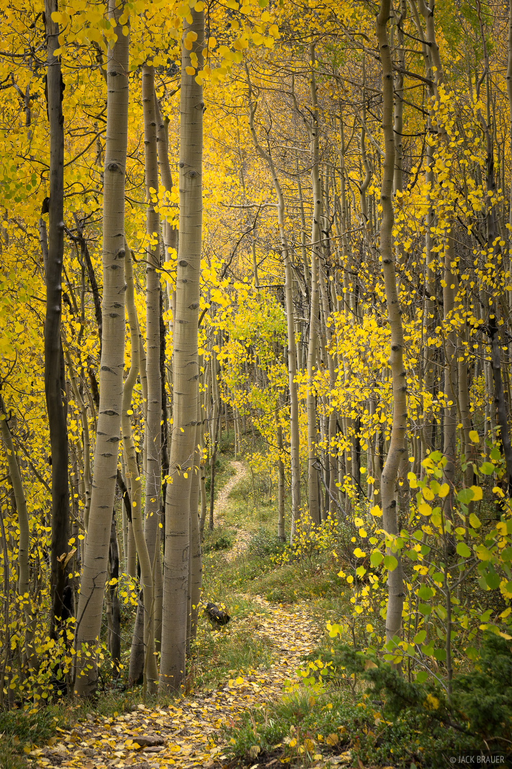 Colorado,San Juan Mountains, aspens, trail, photo
